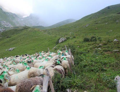 Outside the Sheepfold